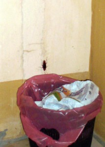 The cockroach that turned Anna and I into pathetic, screeching school girls.