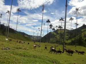 Valle de Cocorra
