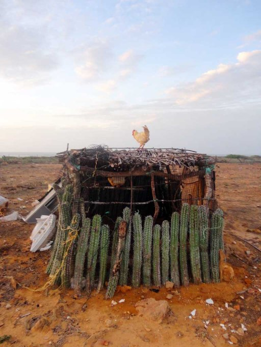 Clever protection on a chicken coop in Punta Gallinas