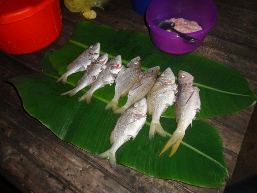 fish ready to be thrown in a hot pot for Rondon