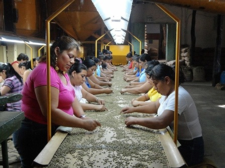 Hardworking women in a coffee factory