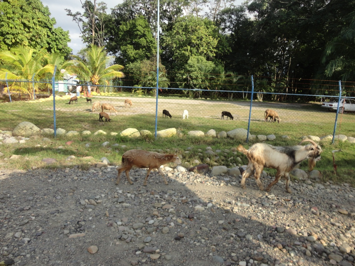 La Ceiba's ship/farmyard