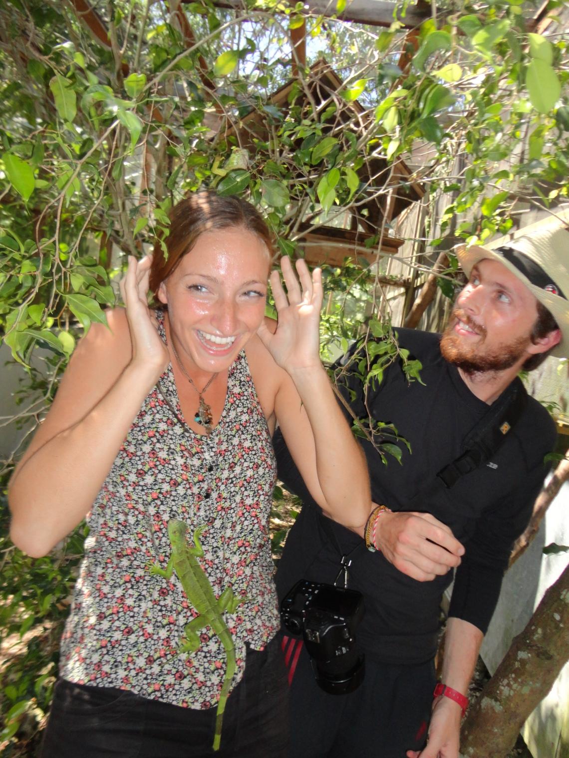 Getting attacked by baby iguanas in San Ignacio