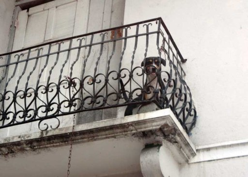 Dog on a balcony; seconds before we witness him peeing off the side