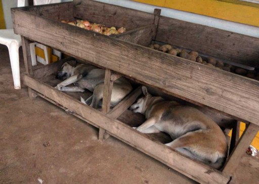 Dogs napping at a market