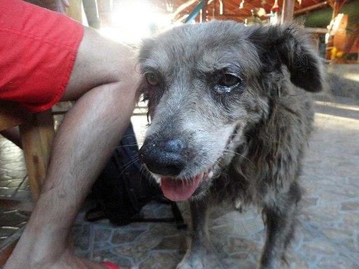Ancient, weathered dog in Las Penitas, Nicaragua