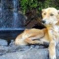 Dog posing by a waterfall in Juayua, El Salvador