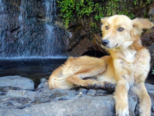 Dog posing by a waterfall in Juayua, El Salvador
