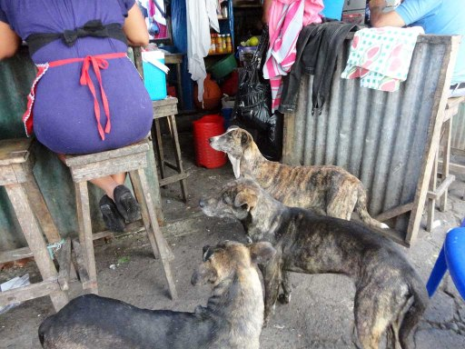 Street dogs begging in the market; Juayua, El Salvador