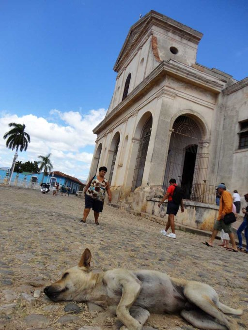 Napping street dog in Trinidad, Cuba
