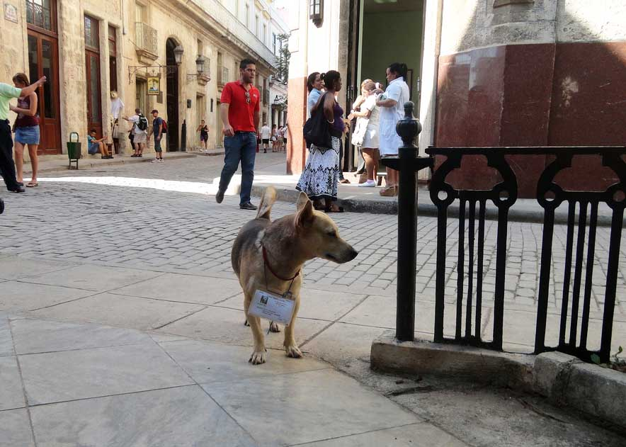 "Dog ""claimed"" to a neighborhood in Havana, Cuba"