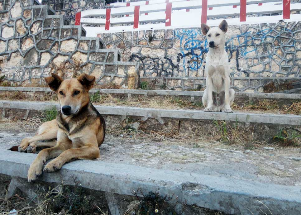 Thug dogs on the cathedral steps in San Cristobal de las Casas, Mexico