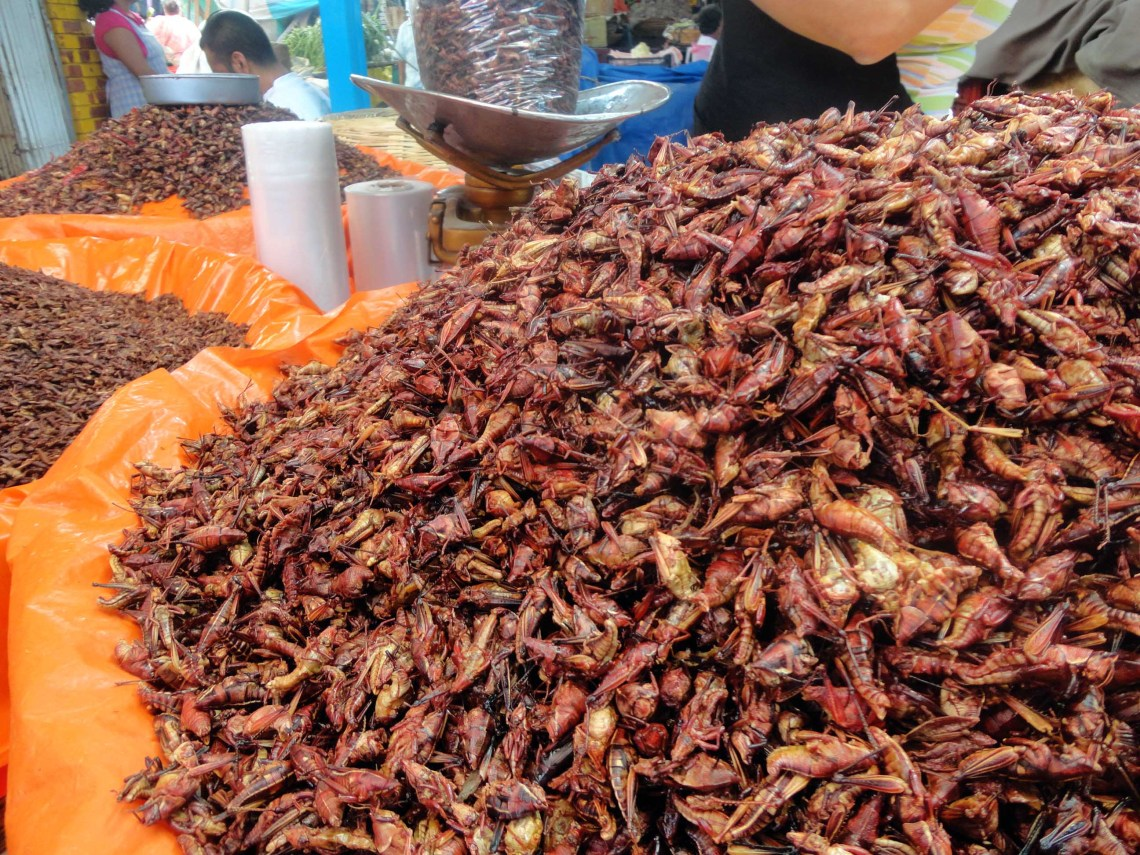 A local delicacy for sale at the Oaxaca market
