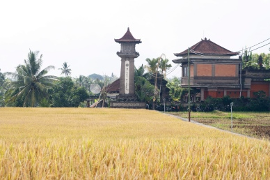 Countryside near Ubud, Bali