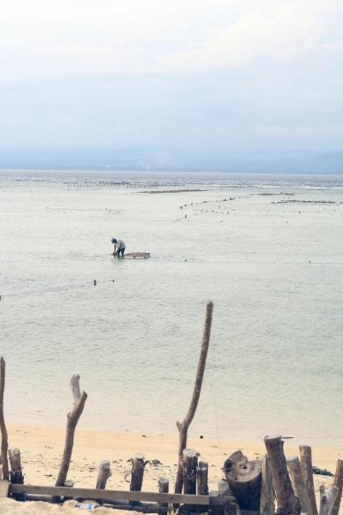Seaweed farmer in Nusa Lembongan