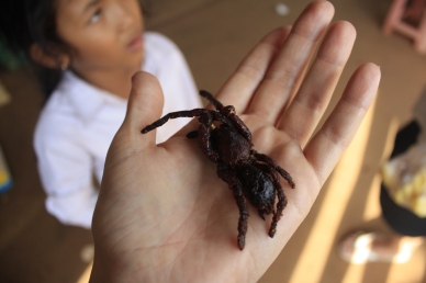 Fried Tarantula; ate this little fellow at a roadside stand in the Cambodian countryside. Crunchy, a tad hairy, nutty flavor with fishy undertones. Not terrible, but not too delicious either.
