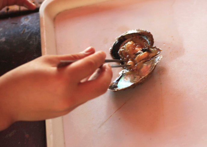 Harvesting the pearl, Ha Long Bay, Vietnam