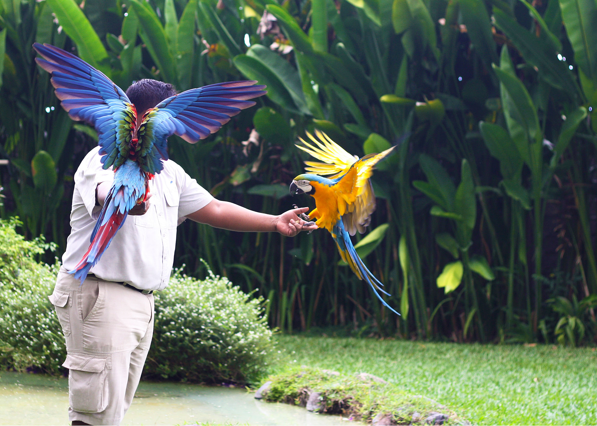 Birds in Paradise: A Day in Bali Bird Park