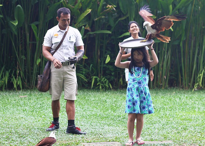 Birds of prey performing at the Bali Bird Park