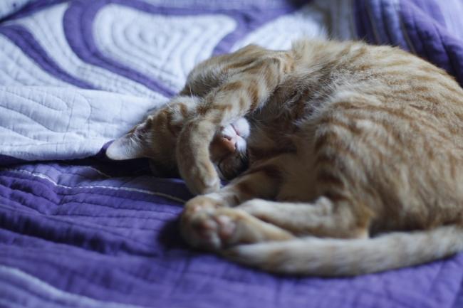 Cat, ubud, bali