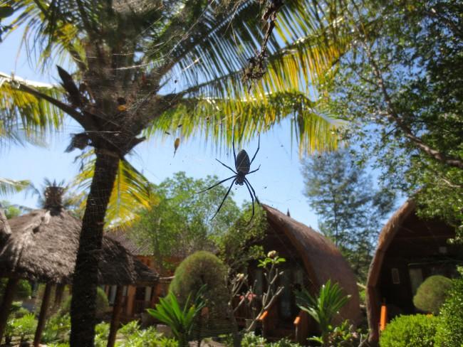 Massive spider outside our bungalow, Gili Meno